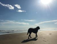 Emmener son chien en voyage à l'étranger n'est pas toujours une bonne idée