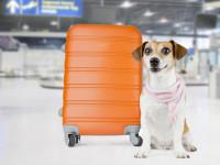 Le jour du voyage en avion avec son chien