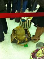 Le prix du voyage en avion pour le chien