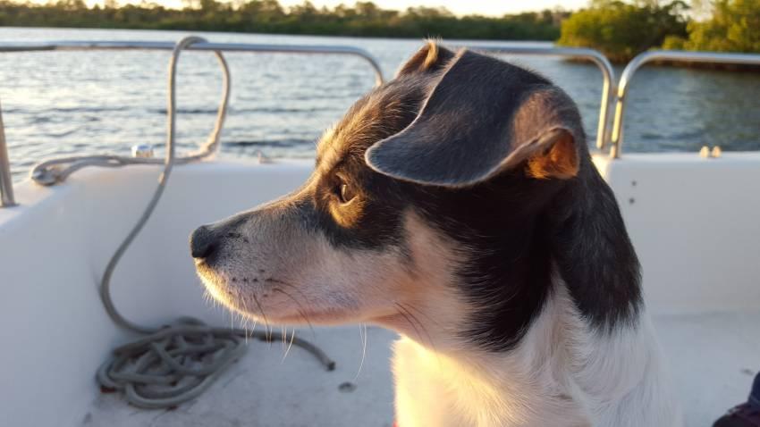 voyager en bateau avec son chien. Black Bedroom Furniture Sets. Home Design Ideas