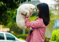 L'odorat du chien contre l'odorat humain