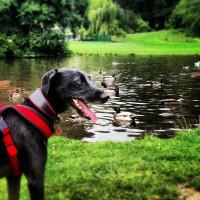 Qu'est-ce que le travail du chien à l'eau ?
