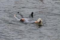 L'apprentissage du travail du chien à l'eau