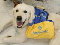 Comment avoir un chien d'assistance quand on est handicapé