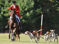 Le rôle des chiens pendant la chasse à courre