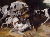 L'hallali et la curée : les chiens rattrapent l'animal chassé et le mangent