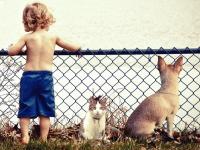 Garde alternée : priorité au bien-être de l'animal et des enfants
