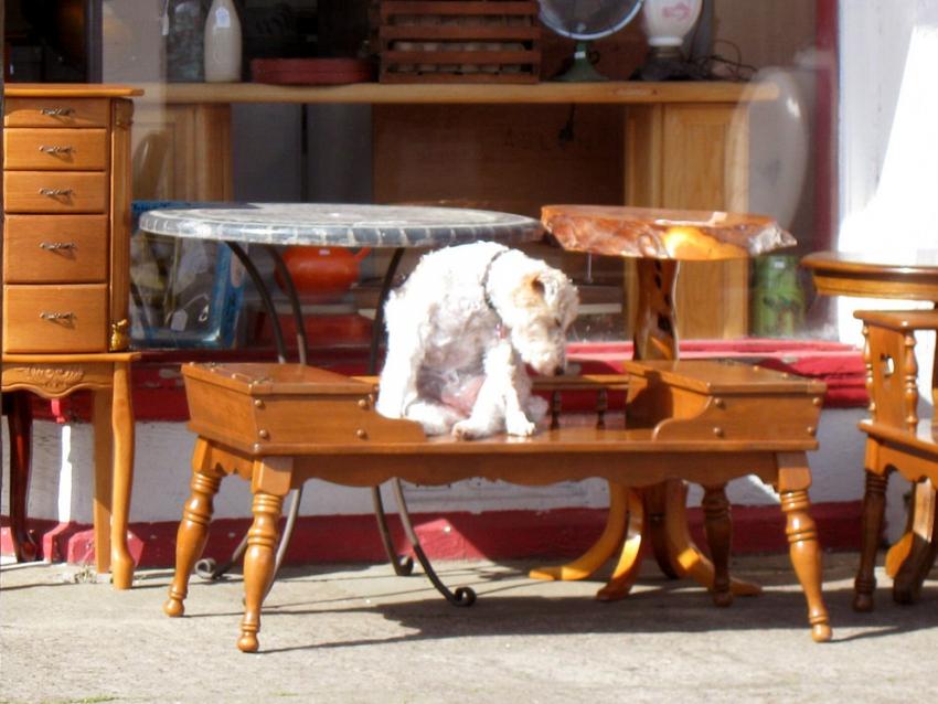 que dit la loi pour mon chien en cas de divorce. Black Bedroom Furniture Sets. Home Design Ideas