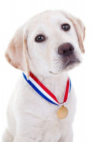 Société Centrale Canine et LOF, un organisme et son outil