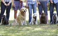 Le rôle de la Société Centrale Canine dans la création du LOF