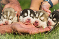 LOF et biodiversité canine