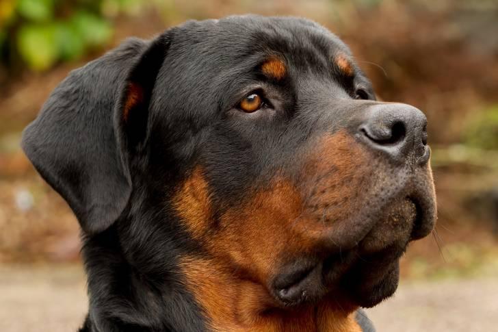 pedigree et livre des origines   comment faire reconna u00eetre son chien