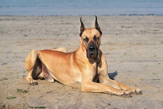 Kidipet Chien - 15 techniques à connaître - Education du chien - Comment y arriver ?