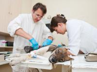 Qu'est ce qu'un auxiliaire vétérinaire ?