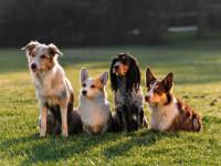 Le métier de pensionneur canin