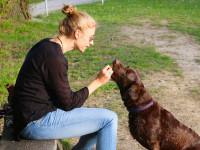 Quand faire appel à un éducateur canin ?