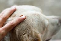 Devenir ostéopathe animalier