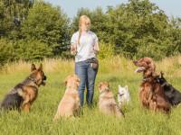 Le métier d'éducateur canin