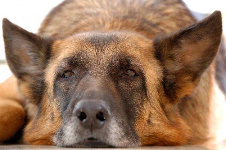 comment aider son chien bien vieillir. Black Bedroom Furniture Sets. Home Design Ideas