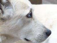 Les diverses origines des maladies du chien