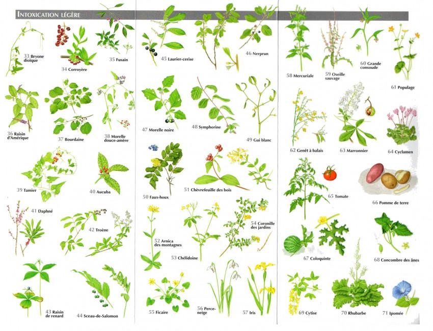 Les plantes toxiques pour les chiens conclusion for Plante toxique chien