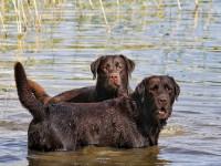 Les risques de la baignade pour le chien