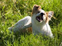 Les dangers des parasites et insectes pour le chien