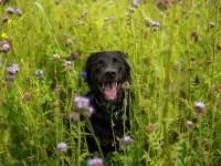 La santé du chien pendant l'été