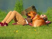Les risques de la chaleur chez le chien