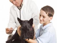 Un constat alarmant quant à la vaccination des chiens