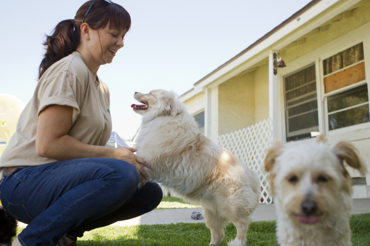 Vermifuger son chien pourquoi quand et comment quand faut il vermifuge - Cuisiner pour son chien ...