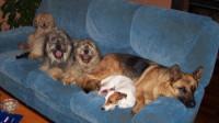 Le canapé, l'endroit préféré des chiens