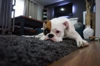 Savoir repérer les signes de malaise chez le chat et le chien