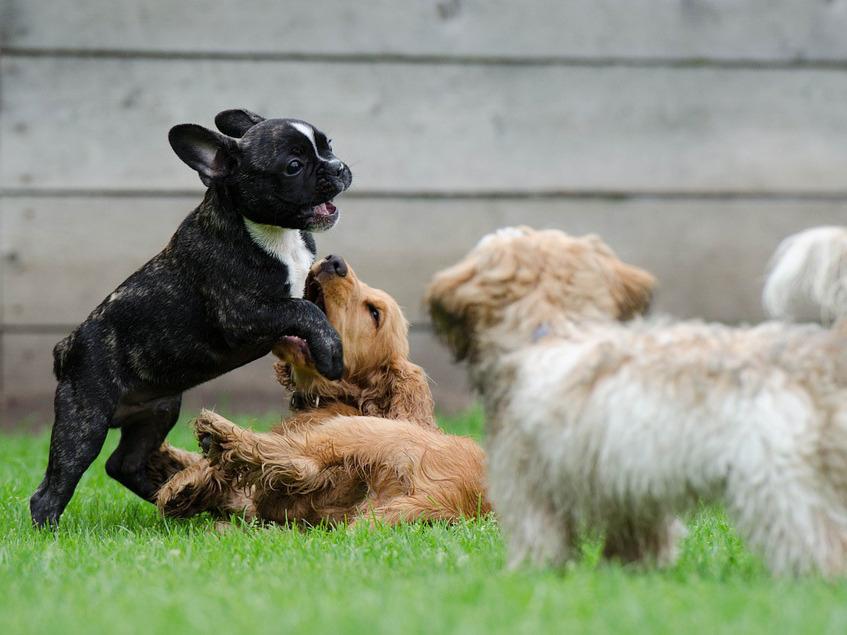 Croissance du chiot : conseils pour aider son chien à bien