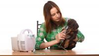 Le traitement de l'asthme du chien