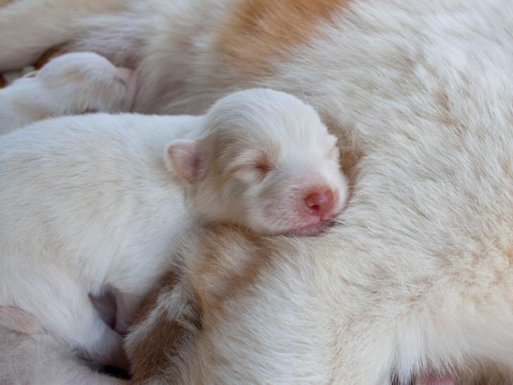 S 39 occuper de chiots de la naissance deux mois - Jeux de chiens a s occuper ...
