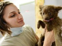 Le certificat de vétérinaire avant cession d'un chien