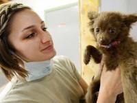 Mieux vaut prévenir que guérir : vaccination et stérilisation