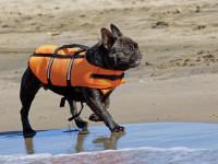 Tous les chiens ne peuvent pas se baigner
