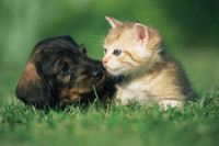 Pourquoi traiter un chien ou chat qui souffre ?
