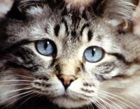 Comment savoir si son chien ou chat a mal ?