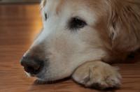 Comment prévenir la pyodermite du chien ?