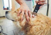 Les examens vétérinaires pour diagnostiquer un cancer du chien