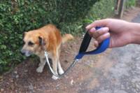Les affections du système digestif chez le chien