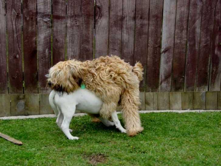 Bonjour à tous,Voila un petit moment que notre chien nous tâche tout !Je vous explique.