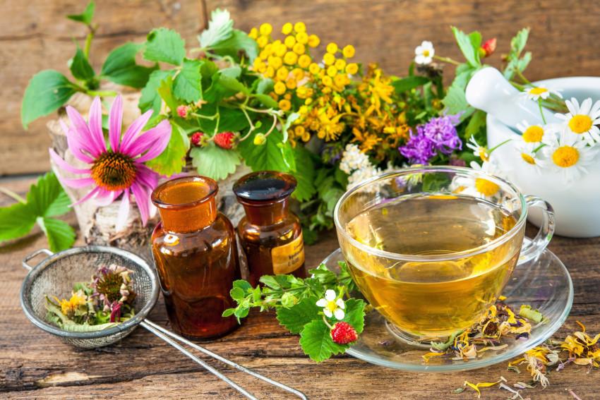 Quelles maladies animales peut on soigner en naturopathie - Quelles sont les plantes que l on peut bouturer ...