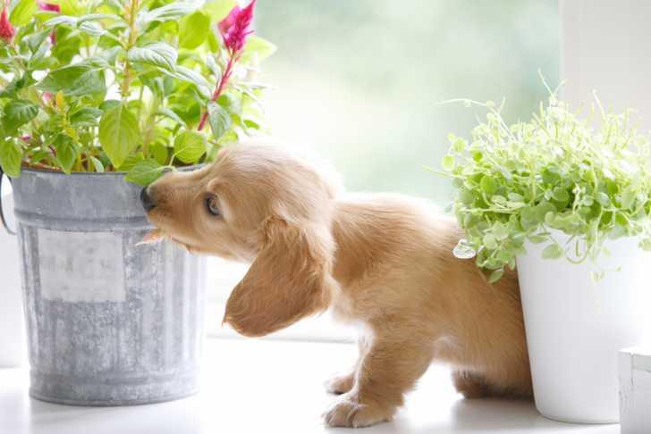 https://upload.chien.com/img_global/25-sante-du-chien/prevention-des-problemes-de-sante-du-chien/les-plantes-toxiques-pour-les-chiens/_xlight-428_7701-les-risques-des-plantes-pour-le-chien.jpg