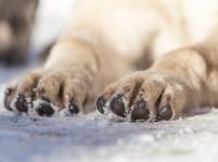 2. Prêter une attention particulière aux coussinets du chien