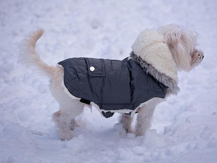 Prot ger son chien contre le froid en hiver - Camelia resistance au froid ...