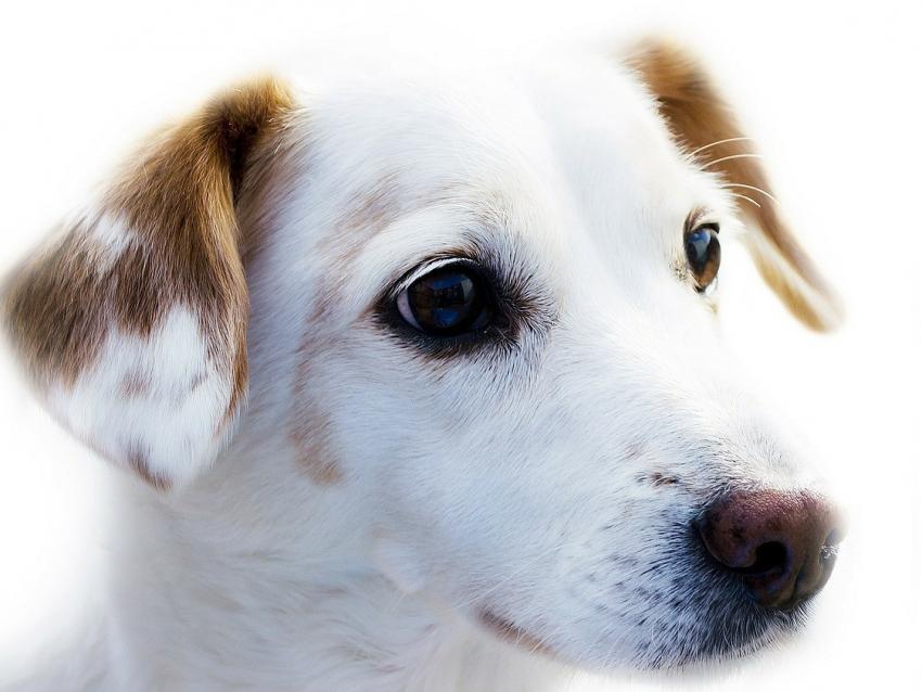 Des astuces pour prendre soin du poil de son chien - Enlever poil de chien voiture ...